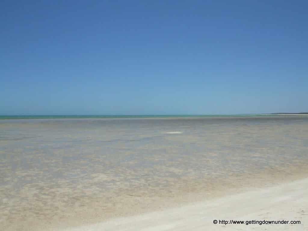 Shell Beach - Monkey Mia - Pictures - shell beach monkey mia western australia 231