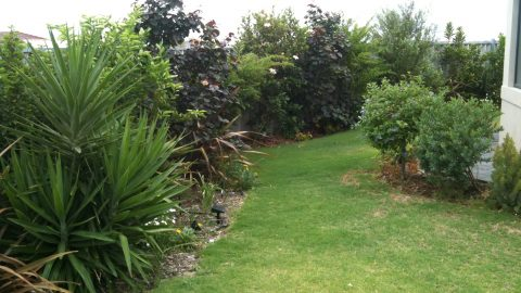 Gardening In Australia – Two Years On