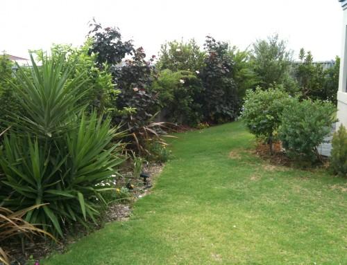 Gardening In Australia – Two Years On