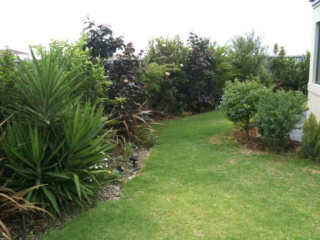 Gardening in Australi a- our flower beds 2 years on.