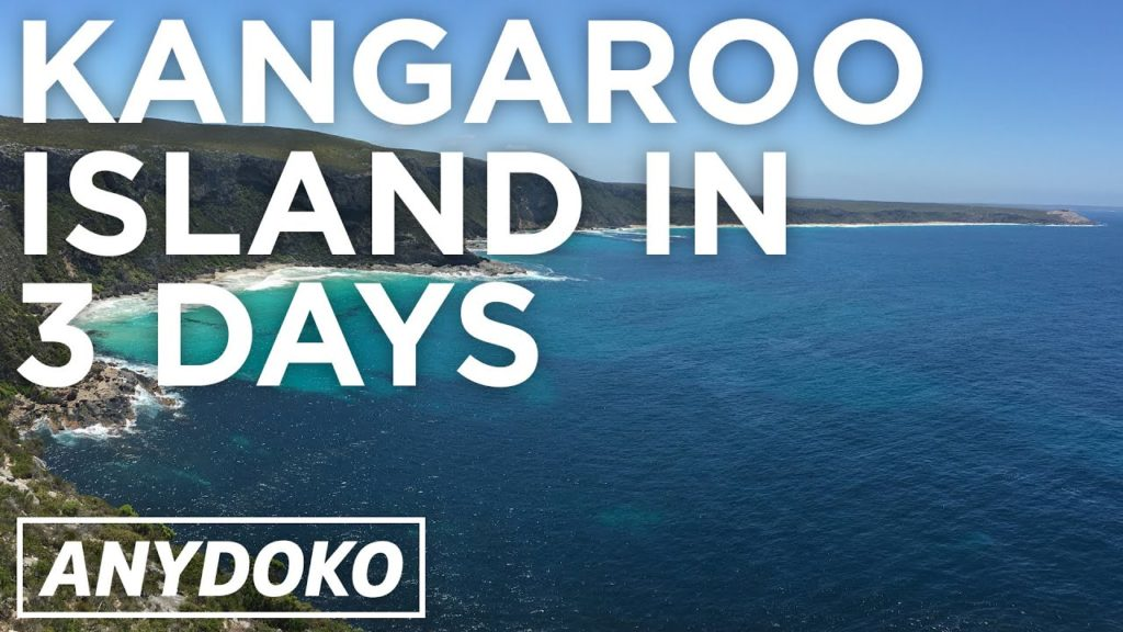 The Best Place To See Kangaroos and Koalas in Australia is Kangaroo Island!