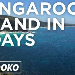 The Best Place To See Kangaroos And Koalas In Australia Is Kangaroo Island!