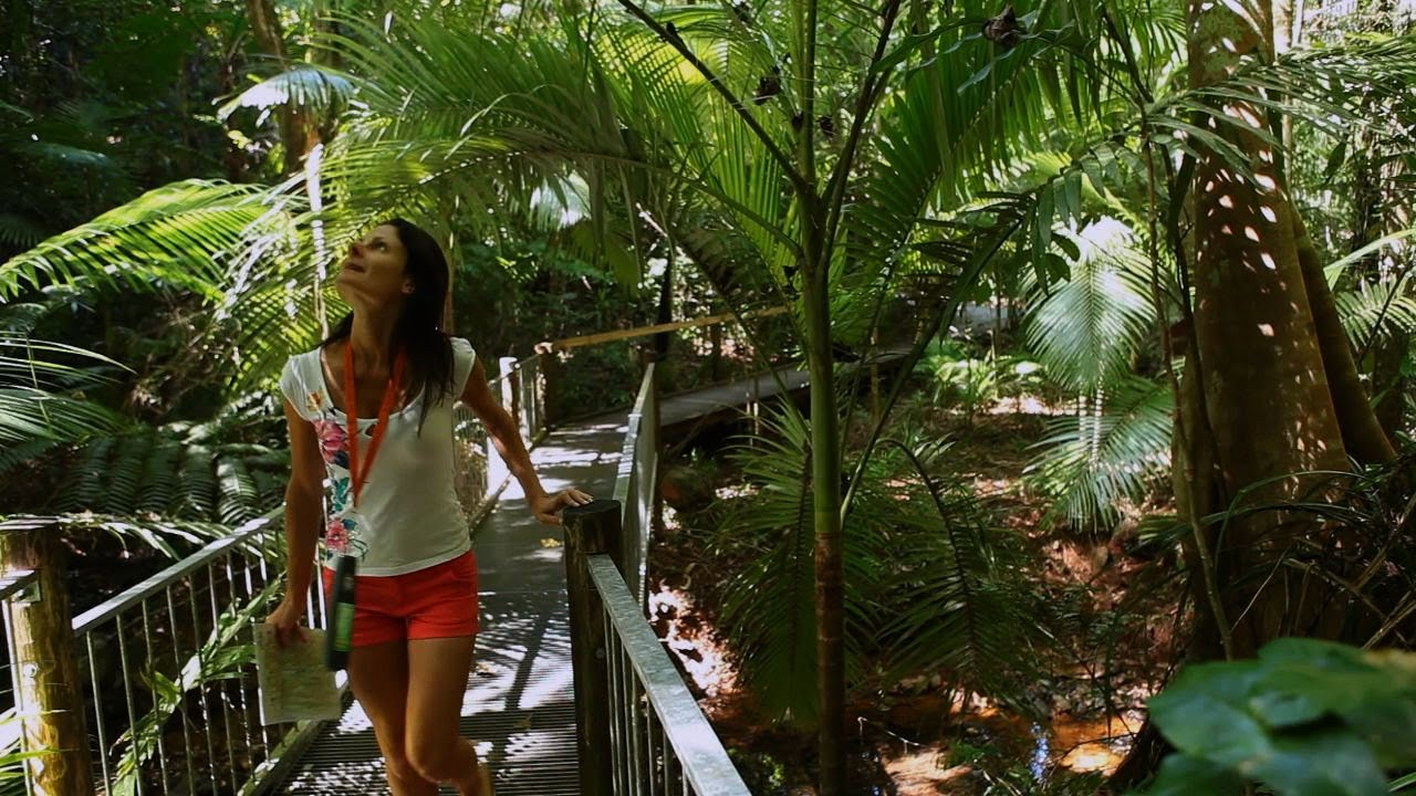 Daintree travel video guide Queensland Australia