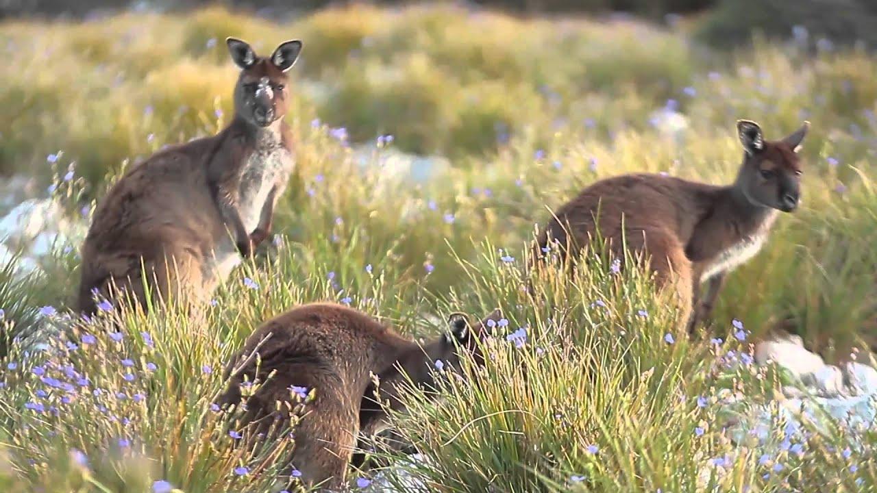Kangaroo Island, South Australia - an insider's guide