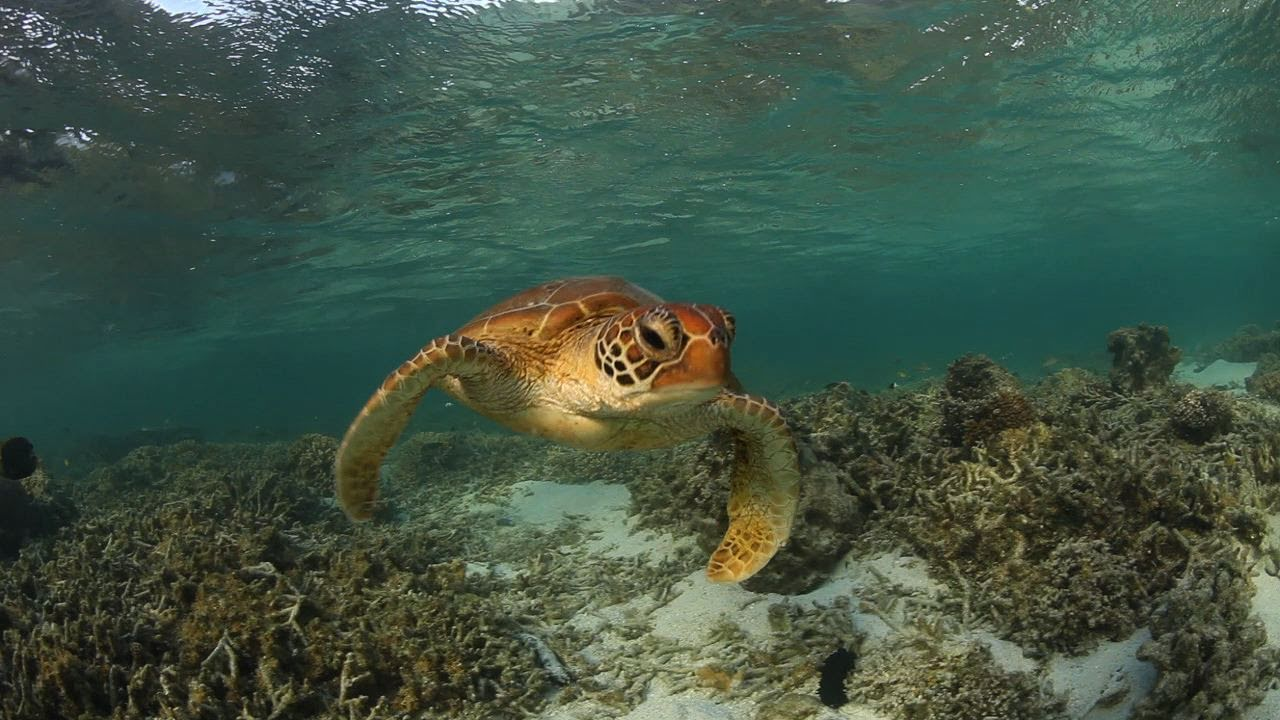 Lady Elliot Island Travel Video Guide, Great Barrier Reef Queensland