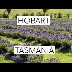 Travel Guide to Hobart, Tasmania - hobart, hobart market tasmania, Maritime Museum of Tasmania, Mount Wellington, Salamanca Market, Tasmania - Travel Guide to Hobart Tasmania