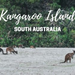 Wildlife Encounters on Kangaroo Island Tour | South Australia | 2019