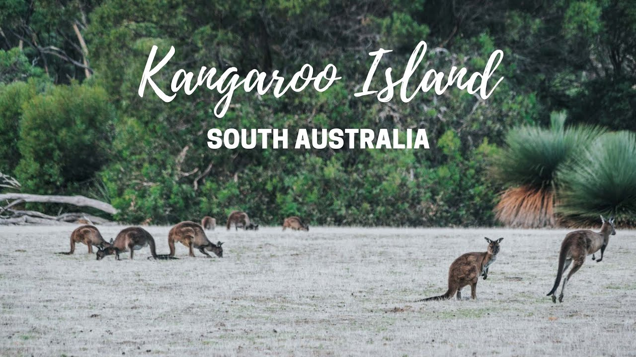 Wildlife Encounters on Kangaroo Island Tour | South Australia | 2019
